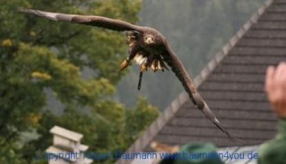 Flugshow-Burg-Hohenwerfen-010