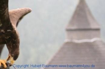 Flugshow-Burg-Hohenwerfen-012