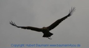 Flugshow-Burg-Hohenwerfen-015