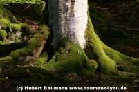 Spessart Herbst 025
