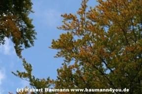 Spessart Herbst 032