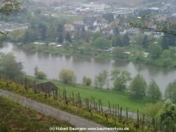 Main-Wanderweg-Klingenberg-Blick-Main-Wörth