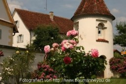 IMGAm Schloss Salem