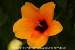 Mainau - im Schmetterlingshaus