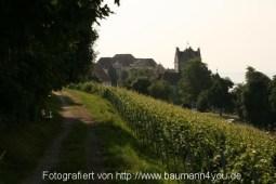 Fußweg durch den Weinberg mit Blick auf die alte Burg