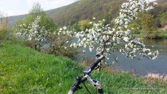 Frühling / Blühende Obstbäume