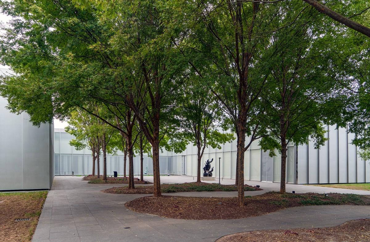 Gruppe von Bäumen vor Raleigh Art Museum