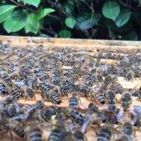 Saisonbienenstart