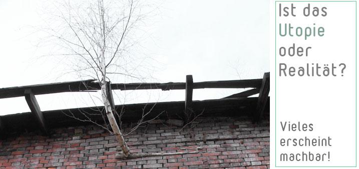 Birkenbewuchs im Mauerwerk! Oder: So schnell lässt sich die Natur nicht verbieten!
