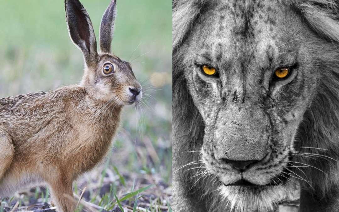 Ab in den Hasenbau oder lieber als Löwenfutter enden?