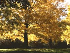 Trees are the most important plants in temperate forests. Deciduous Forests