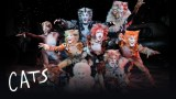 cats stage show