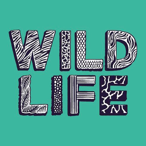 Disclosure and Rudimental celebrate another Wild Life Festival success