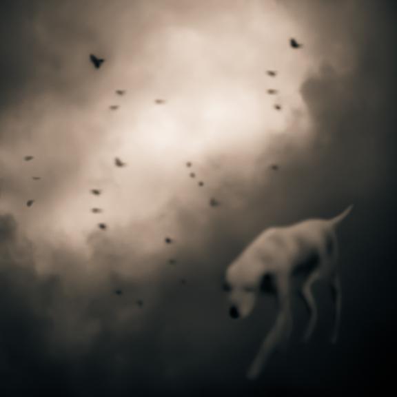 Bird Dog © Tami Bone