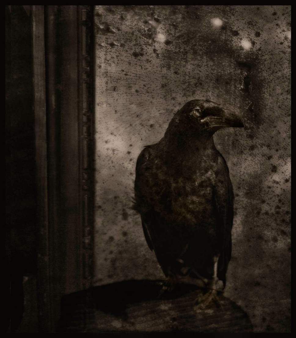 Raven on a Table © Ann George