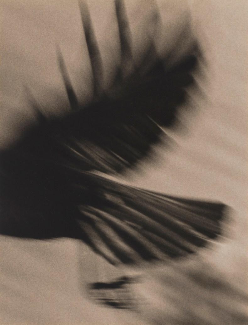 Crow 9 © Jane Olin