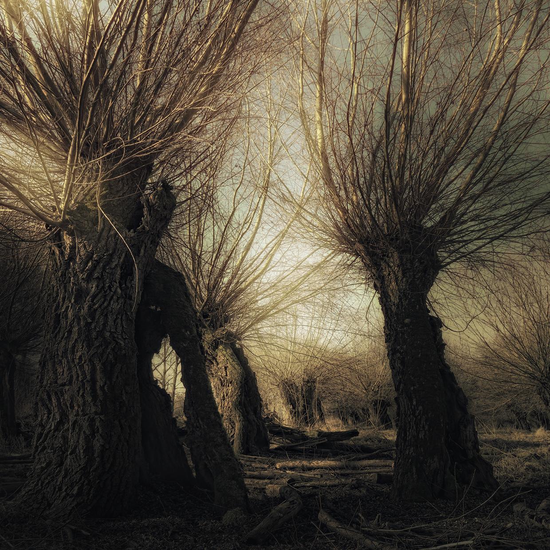 Hunting Ghosts © Bernd Webler