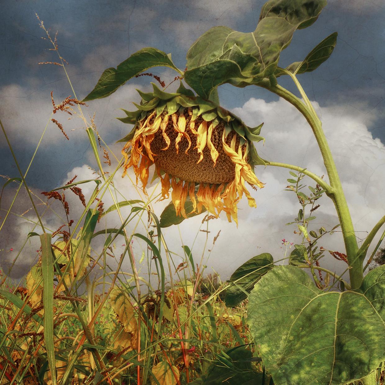 Under the Sun © Bernd Webler