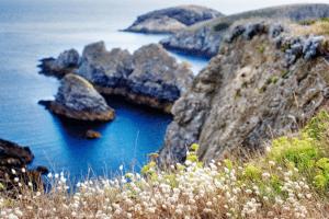 végétation en bord de falaise