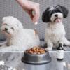 restorapet in dog food