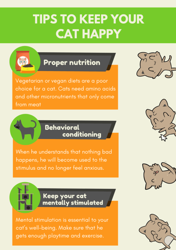 Tips to make your cat happy