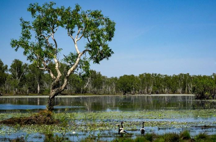 Sandy Billabong Kakadu National Park