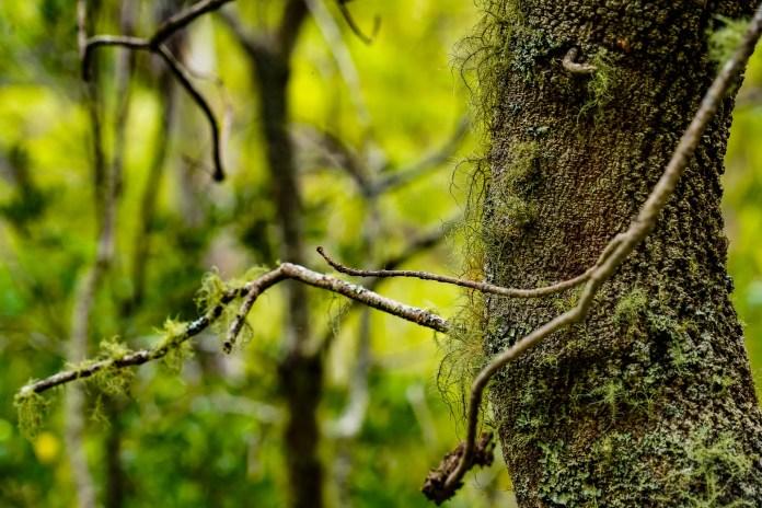Gondwana Rainforest Queen Mary Falls
