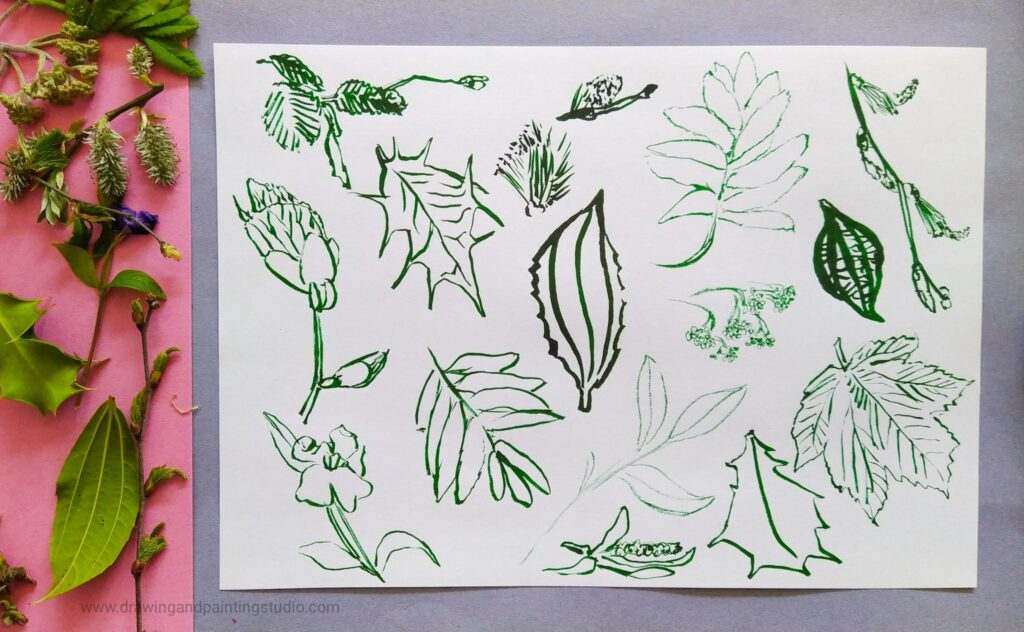 Edges, spikes and curves of leafy patterns