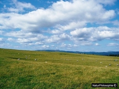 A photograph of the countryside north of Glasgow - sheep grazing. Image: NaturPhilosophie