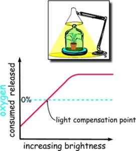 A graph illustration showing the compensation point of light in plant growth.