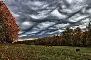 A photograph of grey and menacing asperitas clouds over woodlands.