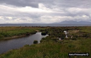A photograph of the rocky shore between Seamill and Portencross in Scotland, showing the Machair. Photograph: NaturPhilosophie