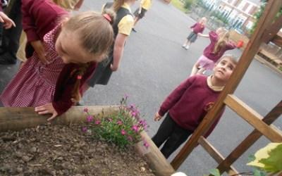 Using our senses to describe summer…