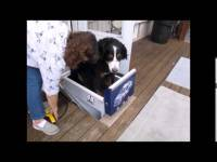 Canine Stair Lift  Acorn Stairlifts Home