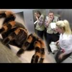 Elevator Spider Prank – IPad Magic With Simon Pierro