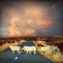 Irish-Traffic-Jam