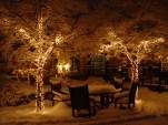 lit-trees