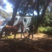 Teresa lämnar motvilligt över Dinellis grimskaft