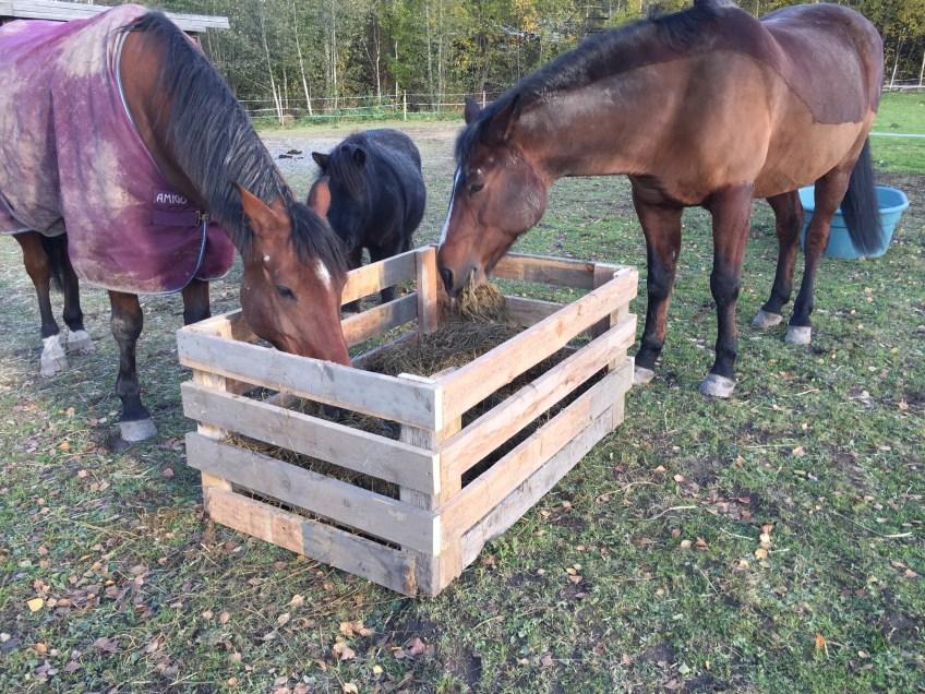 Blir hästar trötta av att gå ute?