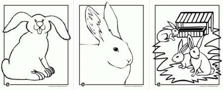 Freebies: Bunny Images