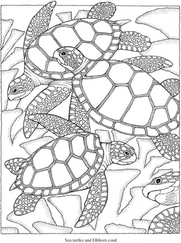 Freebie Sea Turtle Coloring Page Stamping