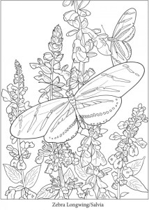 4 Butterfly Coloring Pages
