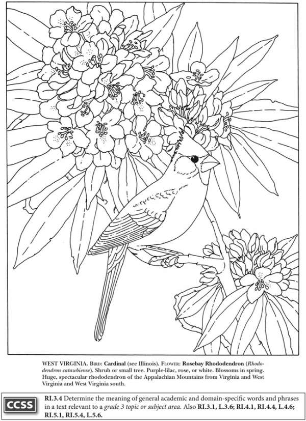 4 State Bird Coloring Pages