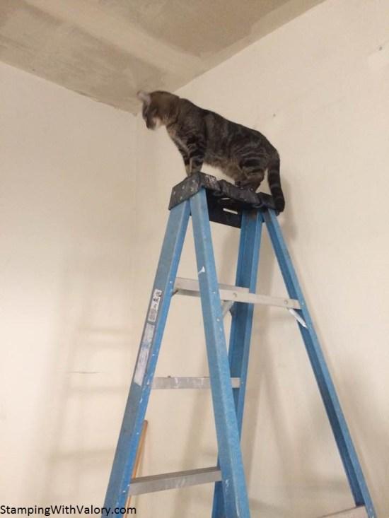 Egypt on Ladder