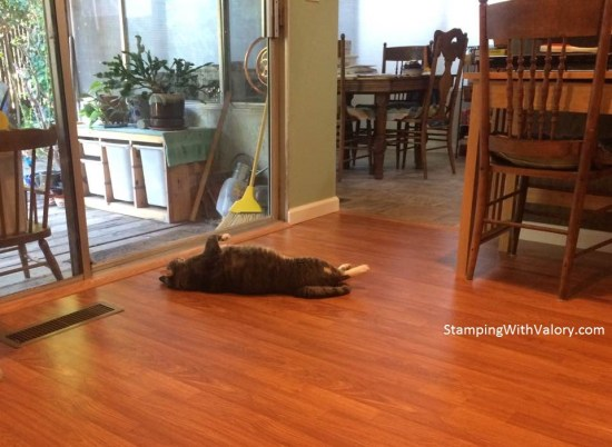 Ziggy on new floor
