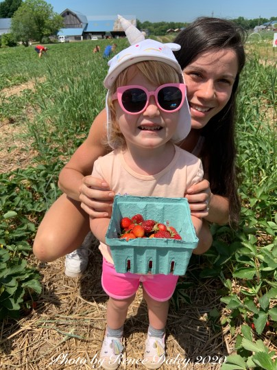 Strawberry Picking Photo by Renee Daley