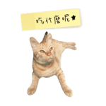 New Durian cat daily