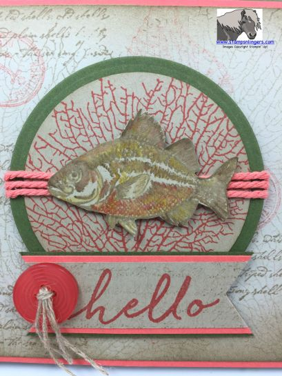Hello Fish SSSC 279 Closeup watermarked