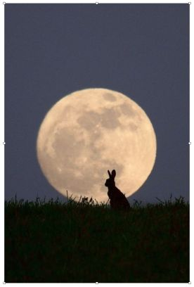 Hare at Moonrise