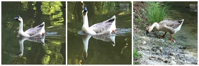 Duck Duck Collage